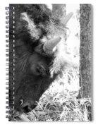 Bison Portrait Monochrome Spiral Notebook