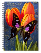 Black And Pink Butterfly Spiral Notebook