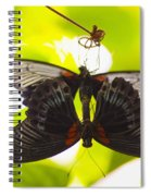 Black And Red Butterflies Spiral Notebook