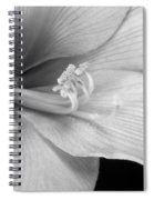 Black And White Amaryllis Bloom Spiral Notebook