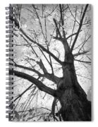 Black And White Autumn Tree  Spiral Notebook