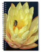 Black And White Beetle On Yellow Pond Lily Spiral Notebook