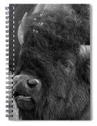 Black And White Bison In Heat Spiral Notebook