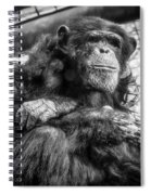 Black And White Chimp Spiral Notebook