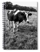 Black And White Cow Spiral Notebook