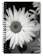 Black And White Daisy 1 Spiral Notebook