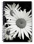 Black And White Daisy 3 Spiral Notebook