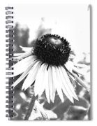 Black And White Daisy Spiral Notebook