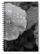 Black And White Dewy Pansy 1 Spiral Notebook