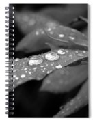 Black And White Dewy Petals Spiral Notebook