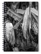 Black And White Ear Of Corn On The Stalk Spiral Notebook