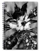 Black And White Flower Spiral Notebook