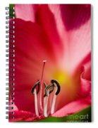 Black And White Flower Pistils Spiral Notebook