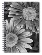 Black And White Gerber Daisies 2 Spiral Notebook