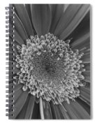Black And White Gerber Daisy 4 Spiral Notebook