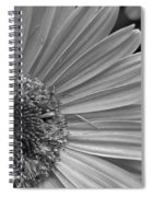 Black And White Gerber Daisy 5 Spiral Notebook