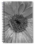 Black And White Gerbera Daisy Spiral Notebook