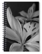 Black And White Lilies 2 Spiral Notebook