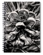Black And White Pine Cone Wall Art Spiral Notebook