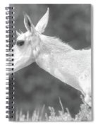Black And White Pronghorn Portrait Spiral Notebook