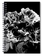 Black And White Roses Spiral Notebook
