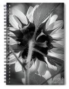 Black And White Sunflower 5 Spiral Notebook
