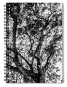 Black And White Tree 2 Spiral Notebook