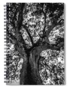 Black And White Tree 4 Spiral Notebook