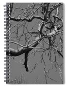 Black And White Tree Branch Spiral Notebook