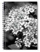 Black And White Twinkle Spiral Notebook