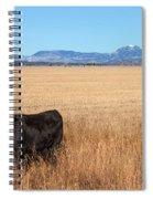 Black Angus Looking Spiral Notebook