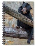Black Bear Cub Sitting On Tree Trunk Spiral Notebook
