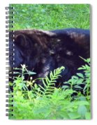 A Florida Black Bear Spiral Notebook