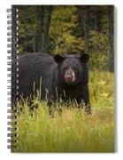 Black Bear In The Grass Spiral Notebook