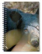Black Bear Oh My Spiral Notebook