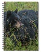 Black Bear Sow Spiral Notebook