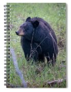 Black Bear Yellowstone Np_grk7085_05222018 Spiral Notebook
