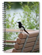 Black-billed Magpie Pica Hudsonia Spiral Notebook