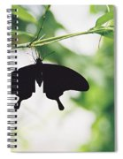 Black Butterfly Spiral Notebook