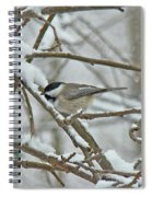 Black Capped Chickadee - Poecile Atricapillus Spiral Notebook