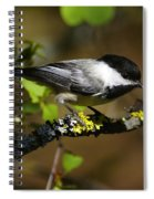 Black Capped Chickadee Spiral Notebook