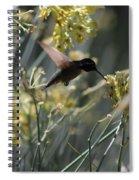 Black Chinned Hummingbird In Flight Spiral Notebook