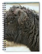 Black Cow Spiral Notebook