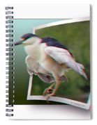 Black Crowned Night Heron - Use Red-cyan 3d Glasses Spiral Notebook