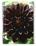 Black Dalia  Spiral Notebook
