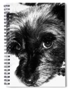 Black Dog Looking At You Spiral Notebook