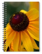 Black Eye Susan Spiral Notebook