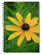 Black Eyed Susan And Friends Spiral Notebook