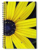 Black Eyed Susan Spiral Notebook