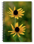 Black Eyed Susans 3276 H_2 Spiral Notebook